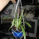 How to make a hanging potted plant rope holder: kinda