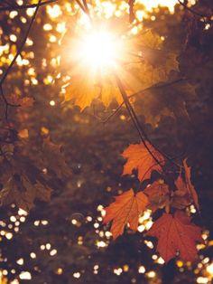"""Nayveth Vizcaya on Twitter: """"Me enamora el otoño, la lluvia y los libros. Las mentes, los pensamientos y el rocío. Prefiero las almas, el mar y sus olas, más que las... https://t.co/dUts0ae5fN"""""""