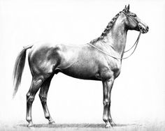 Stymie, The People's Horse by C.W. Anderson | Art Posters & Prints