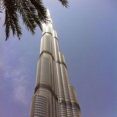 A tree in Dubai