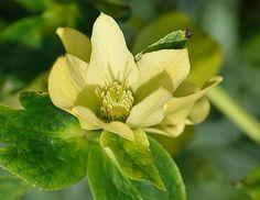 Green Flowers, Plants, Flora, Plant, Planting