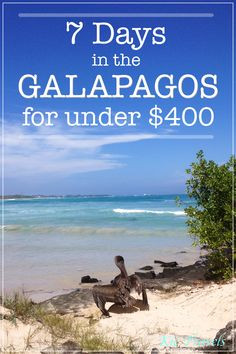 Complete 7 Day itinerary for backpacking in the Galapagos for under $400. There are heaps of free activities to do in the Galapagos including swimming with sea lions, snorkelling with sea turtles and relaxing on pristine beaches. #Galapagos #Ecuador #Backpacking #Budgettravel #Travel #BackpackingGalapagos #Snorkelling #Sealions #Galapagosonabudget