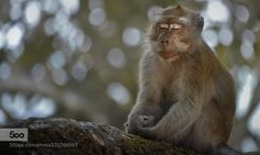 Meditation by FahmiBhs. Please Like http://fb.me/go4photos and Follow @go4fotos Thank You. :-)