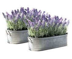 Lavender in tin planters (prefer large round planters)