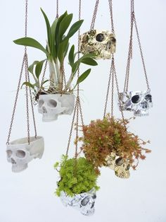 Skulls are so versatile. It's no wonder they're a staple for so many in the villainous community. Just look at these great skull planters. They not only look good but they serve as a clear warning to your enemies and that overly pushy sales guy.