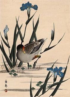 Gallinule and Blue Irises by Imao Keinen