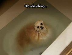 He's dissolving!!!