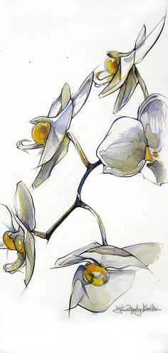 orchids by Jennifer Kraska, via Flickr