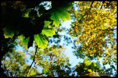 Autumn transition - Autumn mood ... Autumn, Mood, Nature, Plants, Beautiful, Naturaleza, Fall Season, Fall, Plant