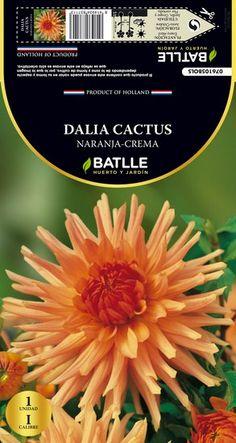 Bulbo Primavera Dalia Cactus naranja crema