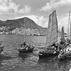 Sampans in Victoria Harbour, Hong Kong Island, (Hedda Morrison) Croatia Travel, Italy Travel, Bangkok Thailand, Thailand Travel, Yu The Great, History Of Hong Kong, British Hong Kong, History Encyclopedia, Victoria Harbour