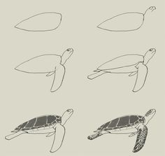 how-to-draw-green-turtle.jpg (700×662)