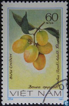 1981 Vietnam - Fruit