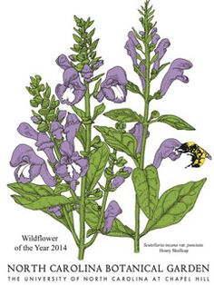 Guide to native plants of North Carolina that are safe to plant in your garden