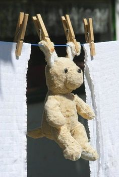 Teddy drying on the line