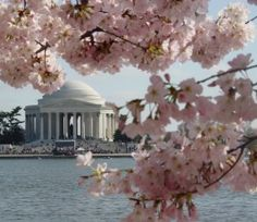 100 Free (& Almost Free) Things to Do in DC | I can't wait until my honeymoon there in March!