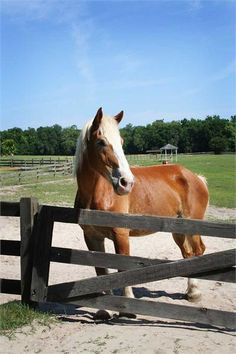 """Visit Mill Creek Farm a retirement """"home"""" for Horses located just north of Alachua, FL"""
