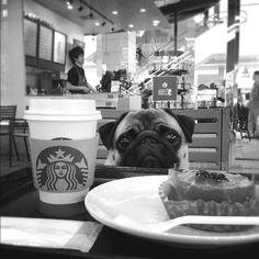 All I need is coffee. #pug