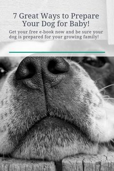Would you like to learn 7 great ways to prepare your dog for your new baby? Get your FREE e-book now and see how prepared you are! Leash Training, Training Your Puppy, Dog Training Tips, Newborn Activities, Diy Dog Treats, Different Dogs, Dogs And Kids, Dog Hacks, Dog Costumes
