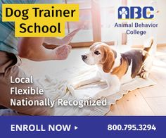 How to Stop a Dog From Barking Online Dog Training, Dog Training Courses, Training Your Dog, Potty Training, Animal Behavior College, Become A Dog Trainer, Obedience School For Dogs, Abc School, Medication For Dogs