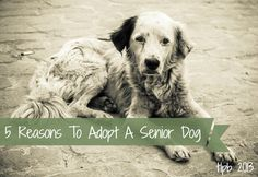 5 Reasons To Adopt A Senior Dog - If you're ready to add a new dog to your household, there are many reasons to consider adopting a senior pet. Animal Shelter, Animal Rescue, Funny Animals, Cute Animals, Dog Ages, Animal Help, Old Dogs, Love Pet, Animals Beautiful