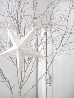 ✯ Wish Upon the Stars ✯ white star on bare branches