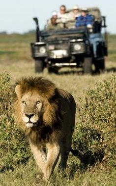 Botswana.  #Botswana #passportready #traveltheworld #wanderlust #adventure #absolutetravel #luxurytravel #wildlife