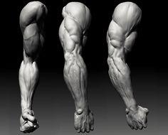 David Lesperance Anatomy Study (davidlesperance.blogspot.com)