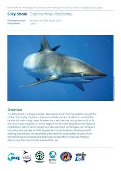 CMS CoP11 Fact Sheets | Project AWARE #CMSCoP11