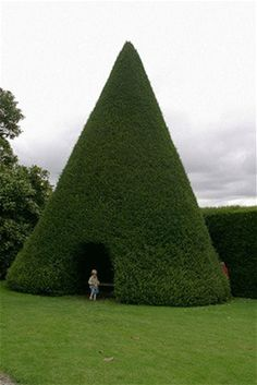 topiaries: best decorative hedges Yew cone arbour at Antony, Cornwall, now that is a tee pee - Top 10 topiaries: best decorative hedges .Yew cone arbour at Antony, Cornwall, now that is a tee pee - Top 10 topiaries: best decorative hedges . Unique Garden, Garden Art, Garden Design, Garden Ideas, Topiary Garden, Parks, Dream Garden, Hedges, Garden Inspiration