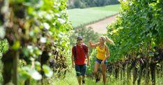 Wine Making, Wine Festival