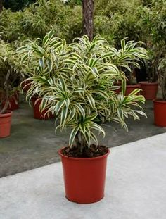 1000 images about plantas de sombra on pinterest ems for Plantas sombra exterior