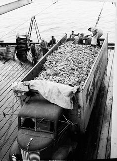 Dungeness Crab season  May 21, 1946 in Astoria, Oregon
