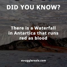 Struggle Facts, Quotes, Wallpapers and Stories Interesting Science Facts, Amazing Science Facts, Interesting Facts About World, Amazing Facts, Interesting Stuff, Wow Facts, Real Facts, Wtf Fun Facts, Physiological Facts