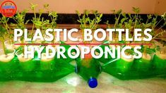 Hydroponic Solution, Home Hydroponics, Hydroponic Grow Systems, Hydroponics System, Hydroponic Gardening, Gardening Tips, Plastic Bottle Planter, Plastic Bottle Crafts, Plastic Bottles