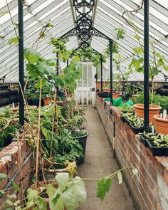 plants-One of the gardener's greenhouses at @chatsworthofficial because well greenhouses. We don't need any reason other than that right?!  #HaarkonGreenhouseTour