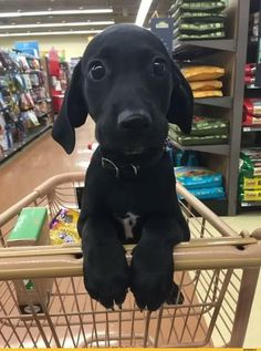 There's nothing like that first trip to the pet supply store..... #dogs #puppies #cute #adorable #doglovers https://www.animalhub.com