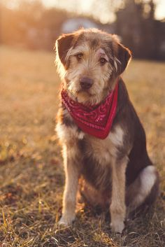 Dog with bandana.