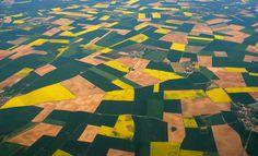 Patchwork de Colza Aerial Photography