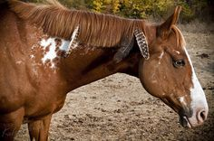 theequus:    Scooter - Indian Pony by Natalie Kilpatrick on Flickr.
