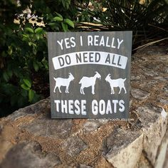 This funny goat sign measures 12 x 12 and is one of our best selling items. You can never really have too many goats, right?! This sign would make the perfect gift for the farmer, goat lover, stock show - FFA - or 4H student in your life. This sign is done on pine wood stained with a