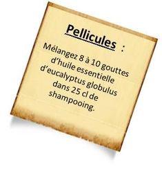 anti pelliculaire avec eucalyptus globulus Préparez votre shampoing anti pelliculaire naturel avec les huiles essentielles