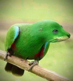 Robbe vs. Papagei, sehr gelungen
