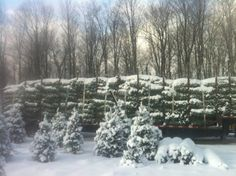Fresh Cut Christmas Trees, Flat Rate, Seasons, Free, Outdoor, Products, Outdoors, Seasons Of The Year, Outdoor Games