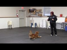 Trick Tuesday - Trick Tutorial - Teach your dog to crawl backwards on command