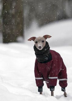 IG in winter. Gotta keep em warm!