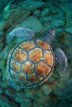 Sea turtle in Tenerife. Beautiful colors of the ocean. Beautiful Creatures, Animals Beautiful, Cute Animals, Mammals, Reptiles And Amphibians, Turtle Love, Underwater Life, Ocean Creatures, Mundo Animal