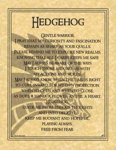 Spirit Totem Animals - Hedgehog