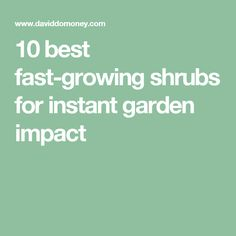 10 best fast-growing shrubs for instant garden impact