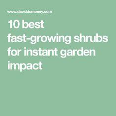 10 best fast-growing shrubs for instant garden impact